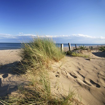 Beach Scene with Dune Grass
