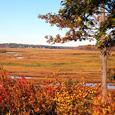 Landscape of the Scarborough Marsh in Autumn